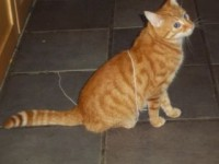 Ginger cat lost in Ardnacrusha