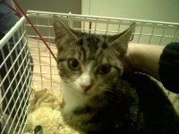 Female cat found in Ballincollig