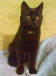 Black kitten found in Macroom